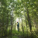 Header image - Trees