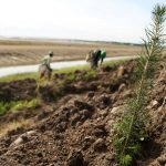 11 million trees and shrubs now planted at Syncrude sites