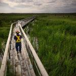 A man walking on a bridge in a wetland.